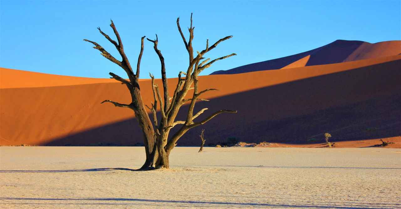 Dead tree emerging from white sand with red sand hills in the background against a blue sky